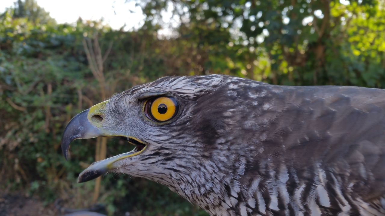 Without Edit ^^ nofilternoedit Eagle - Bird Nature Animal Head  Focus On Foreground Animal Eye One Animal Animal Themes Hawkeye Bird Side View Beauty In Nature Hawkeyes