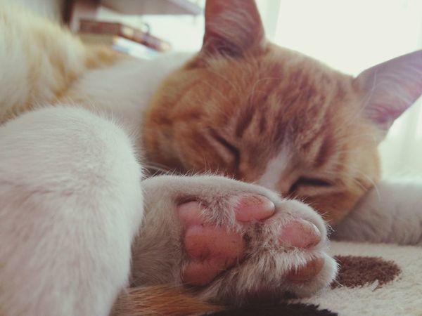 Cat Paws Cute Gato Huellas