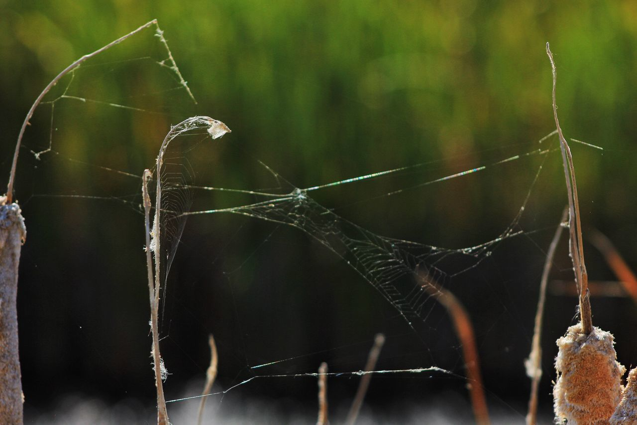 Nature Grasses Wetlands Web Spiderweb Day Outdoors