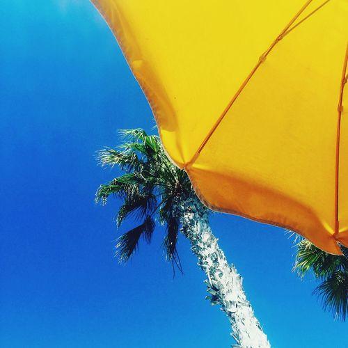 Umbrella Yellow Sun Sky Blue Sky Palmtree