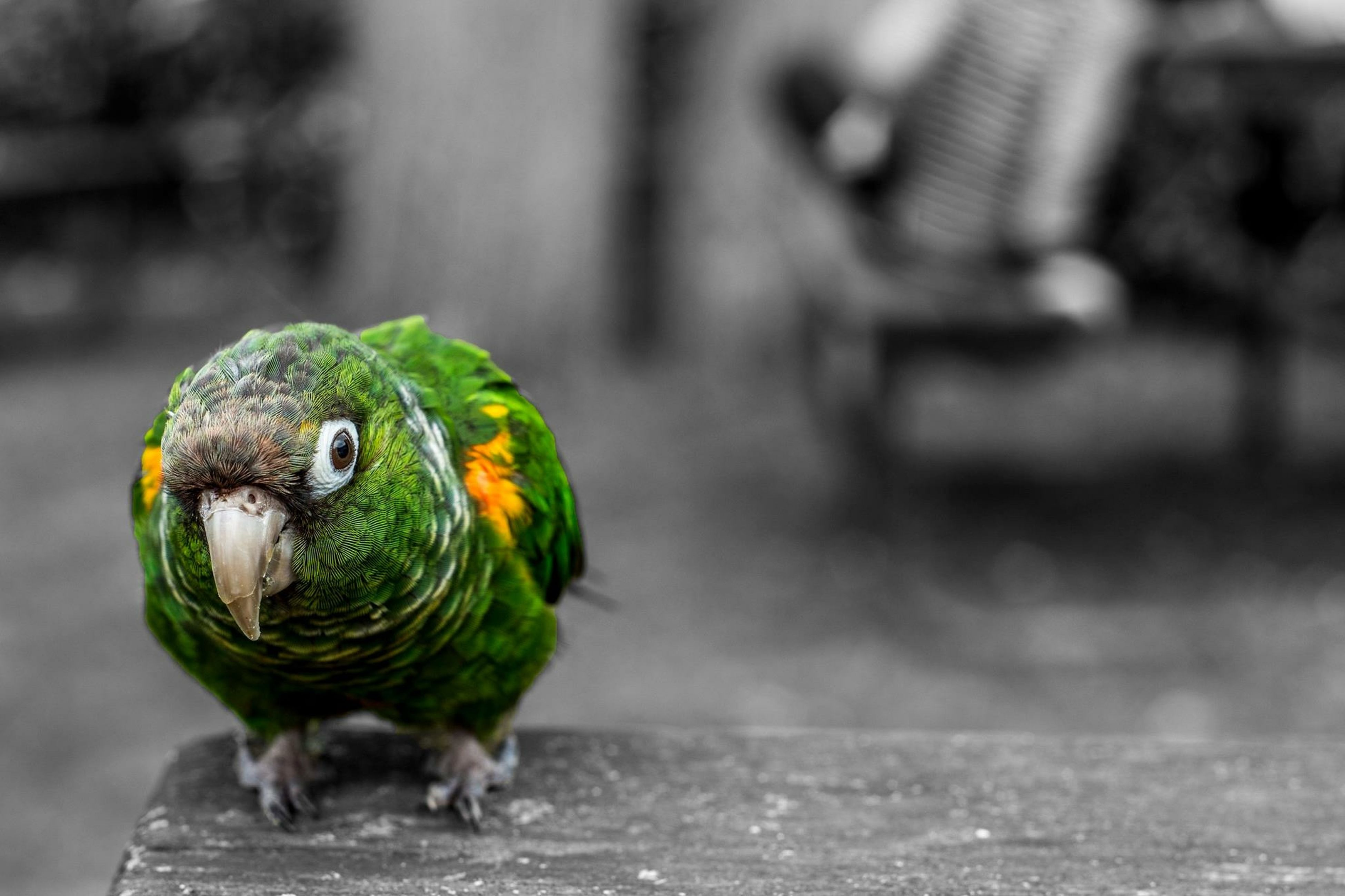 animal themes, bird, animals in the wild, one animal, wildlife, focus on foreground, multi colored, close-up, parrot, full length, beak, perching, selective focus, two animals, outdoors, side view, nature, day, no people, portrait