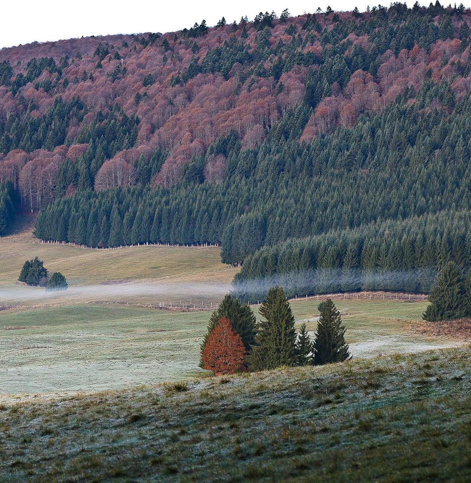 Autumn Colors Cansiglio Fog Prealpivenete Rundifferent