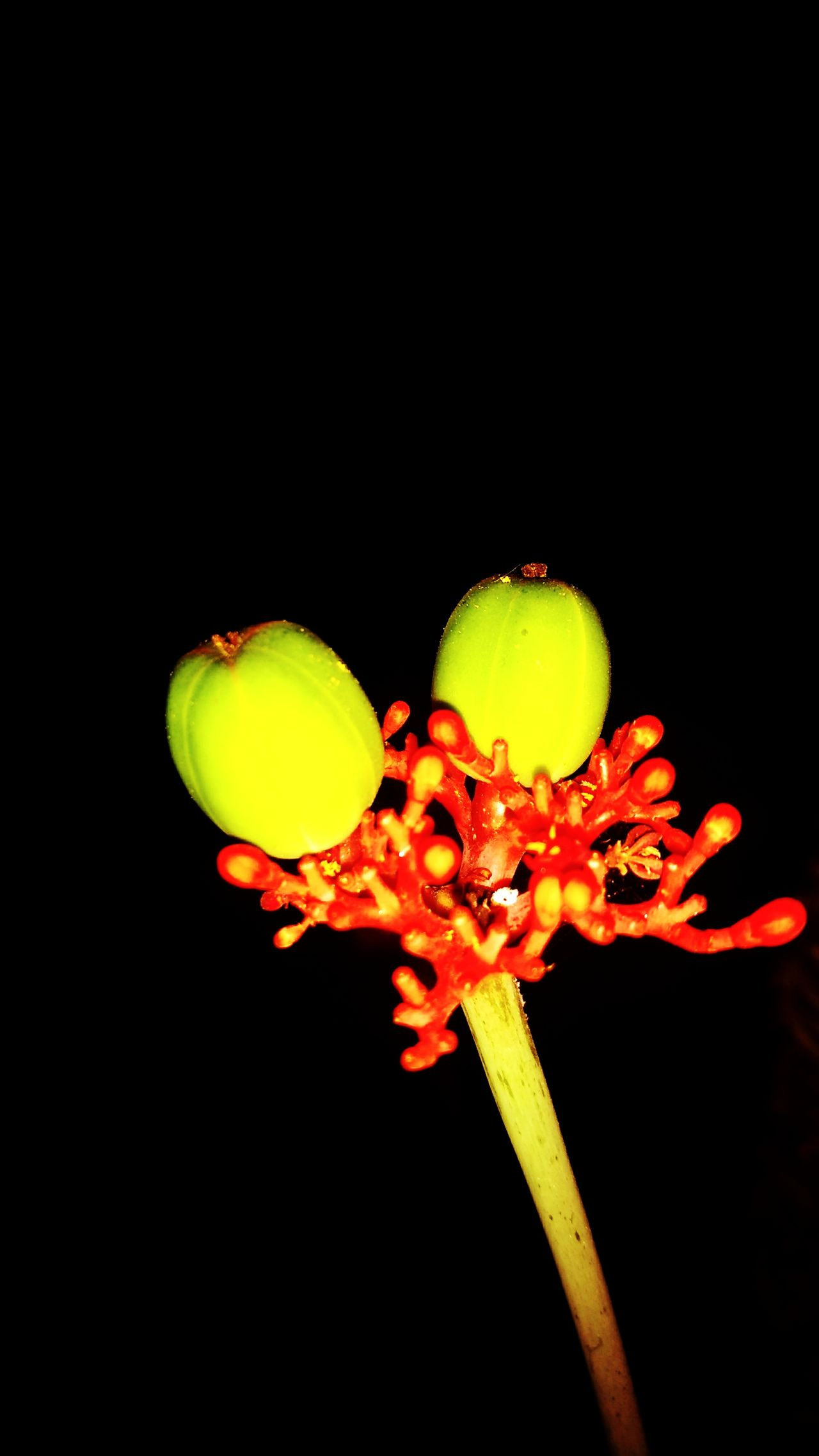 Black Background Close-up No People Outdoors Growth Plant Nature Green Mobile Photography Moto G4 Plus Yellow Nightshot Beginning New Life