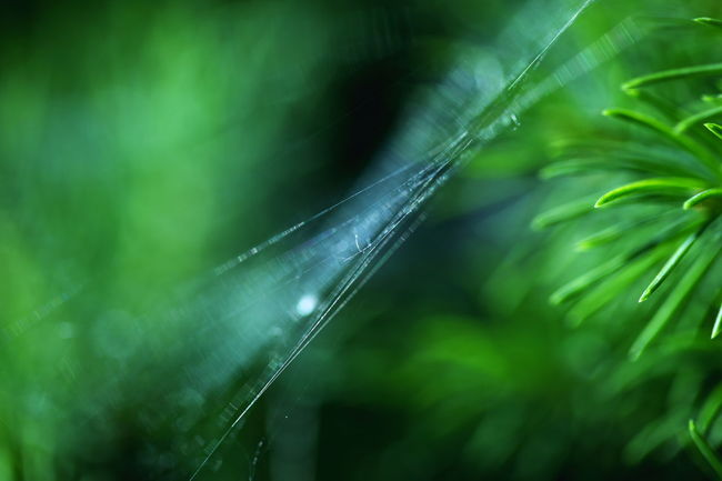Beauty In Nature Close-up Day Delicate Detail Dew Focus On Foreground Fragility Green Natural Pattern Nature Nature No People Outdoors Plant Selective Focus Softness Spider Web Tree Web