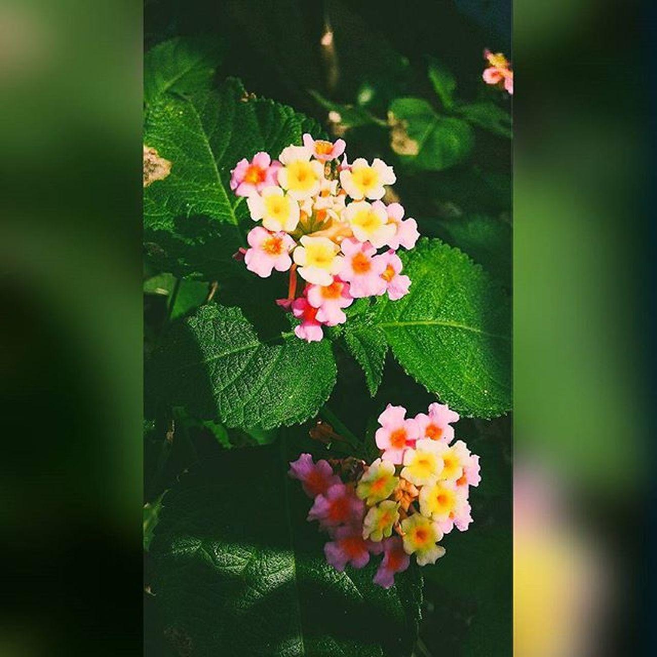 Vnmaphotography 📷 Flowers 🌸 Nature 🍃 Instasize 👣