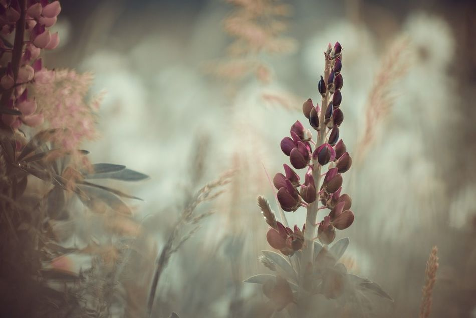 Beautiful stock photos of meadow, Beauty In Nature, Bud, Day, Flower