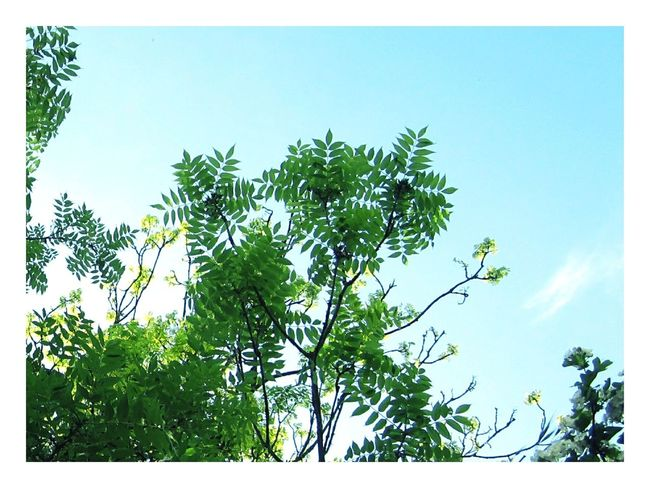 ◽🍥fresh 🍥◽ Hello World Sunday Afternoon Fine Art Abstract Nature Green Green Green!  Just Leaves Lookingup Fresh 3
