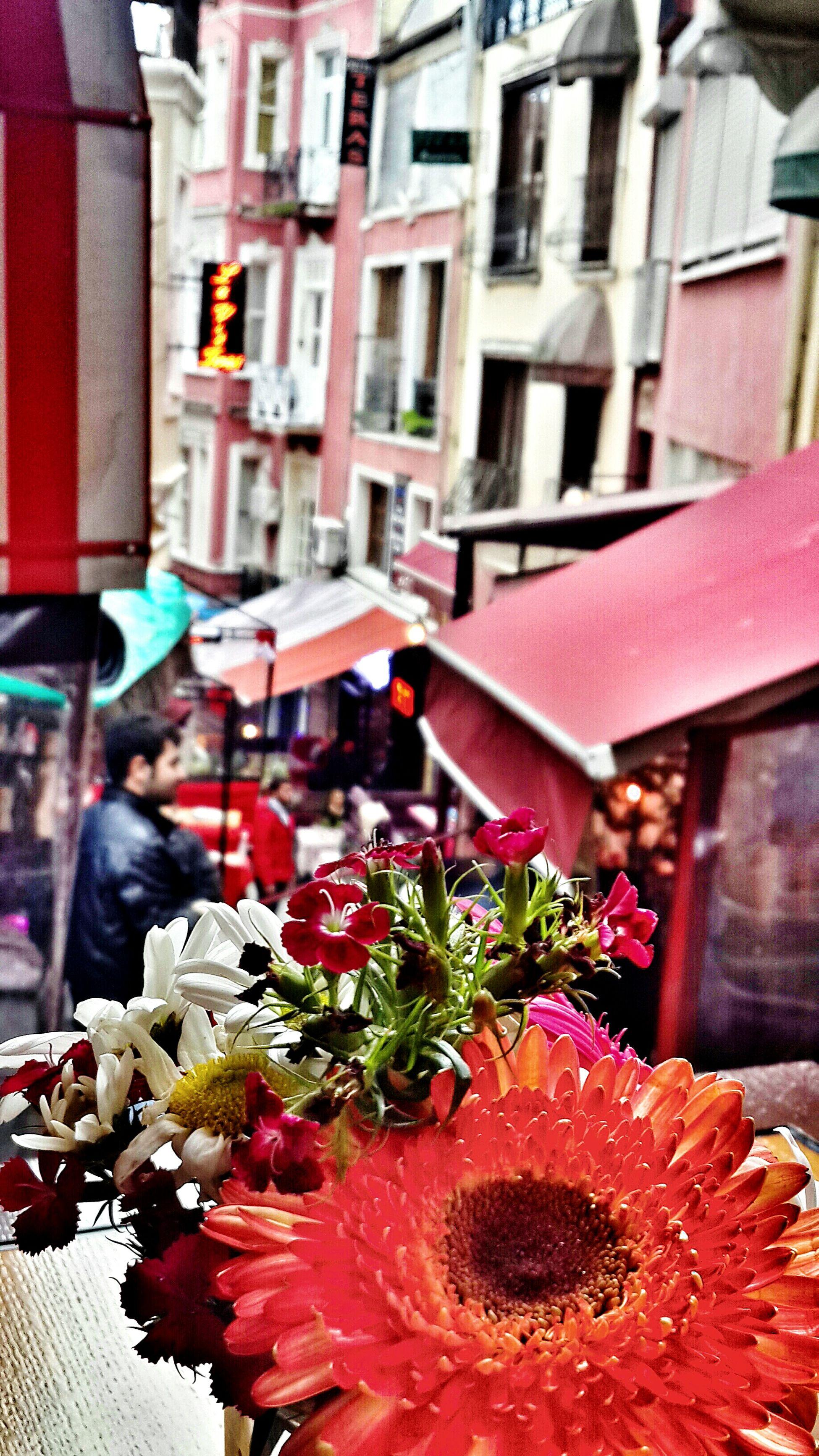 From Fransız Sokağı in Istanbul 🌿🌺 French Street Colorful Flower Taksim Beyoğlu Sightseeing Turkey