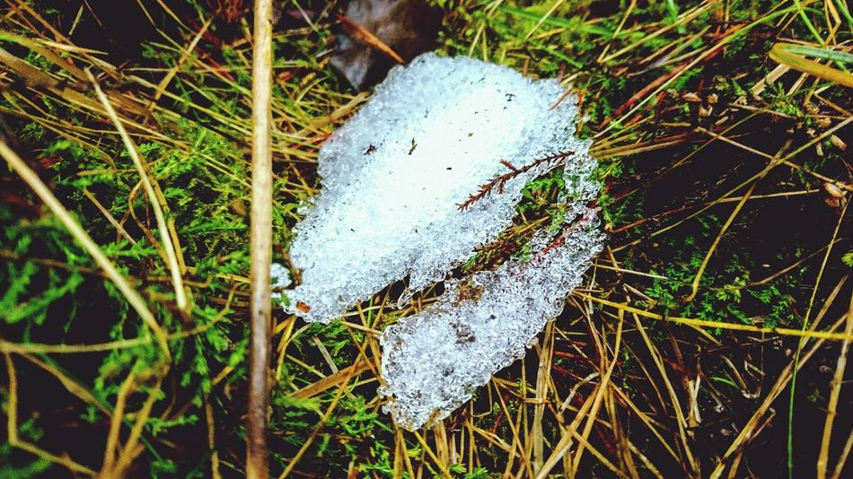 Outdoors Day No People Cold Temperature Water Close-up Walk Walking Forest Grass Green Color Plants 🌱 Angelina B Sony Xperia Photography. Beauty In Nature Melted Snow :( Snow ❄ Forest Plants Fresh Air & Nature Plant Growth Life Nature Forest Photography Forestwalk