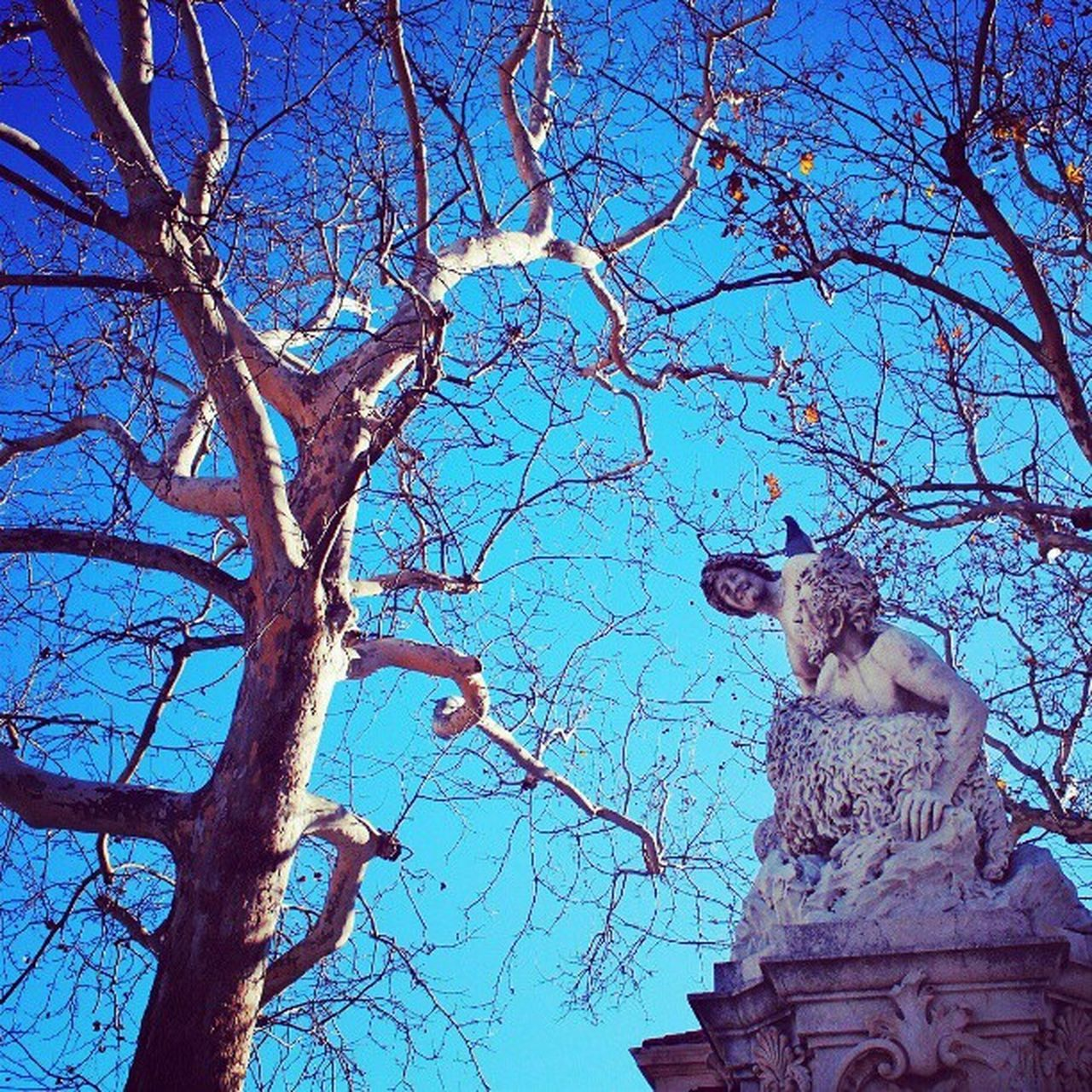 bare tree, tree, branch, statue, sculpture, no people, sky, low angle view, outdoors, nature, day, beauty in nature