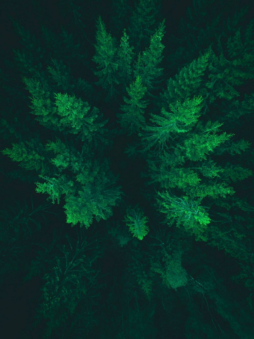 tree, nature, beauty in nature, green color, winter, fir tree, branch, no people, night, christmas, tranquility, forest, treetop, christmas tree, backgrounds, cold temperature, outdoors