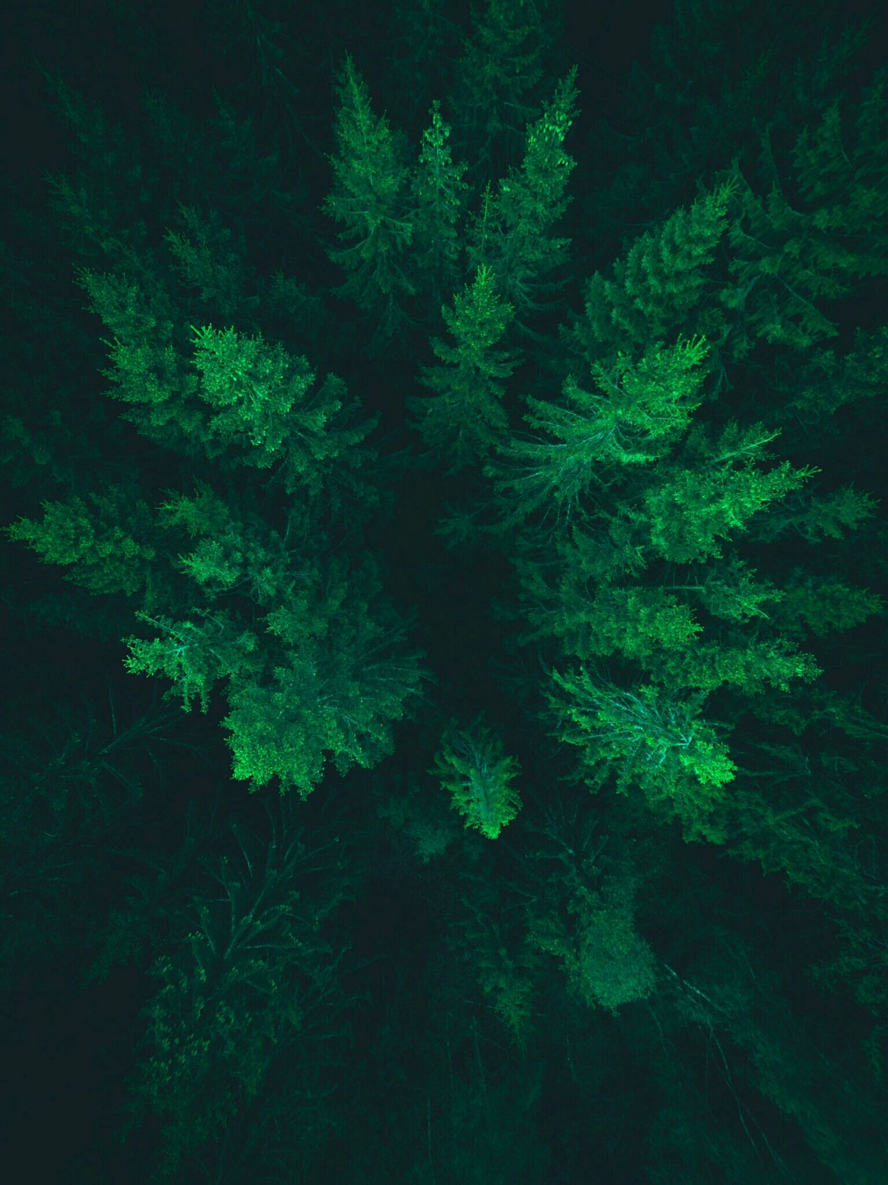 Come down to us. We will catch you. Fir Woods Forest Green Color Green Drone  Dronephotography Droneshot Drone Moments Drones Sweden Småland Växjö  Travel Color Of Life Colour Of Life A Bird's Eye View