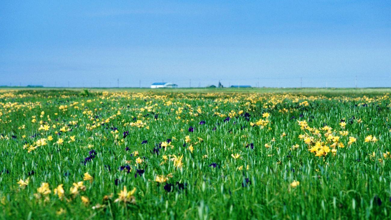 ニッコウキスゲの原 Hello World Traveling Travel Photography Film Nature Nature_collection EyeEm Nature Lover Flowers Wilderness Notsuke Peninsula