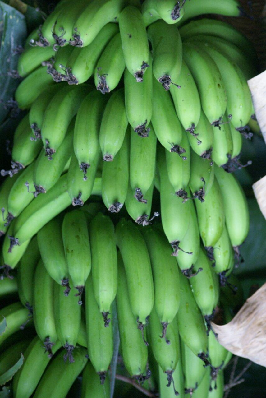 Close-Up Of Raw Bananas On Tree