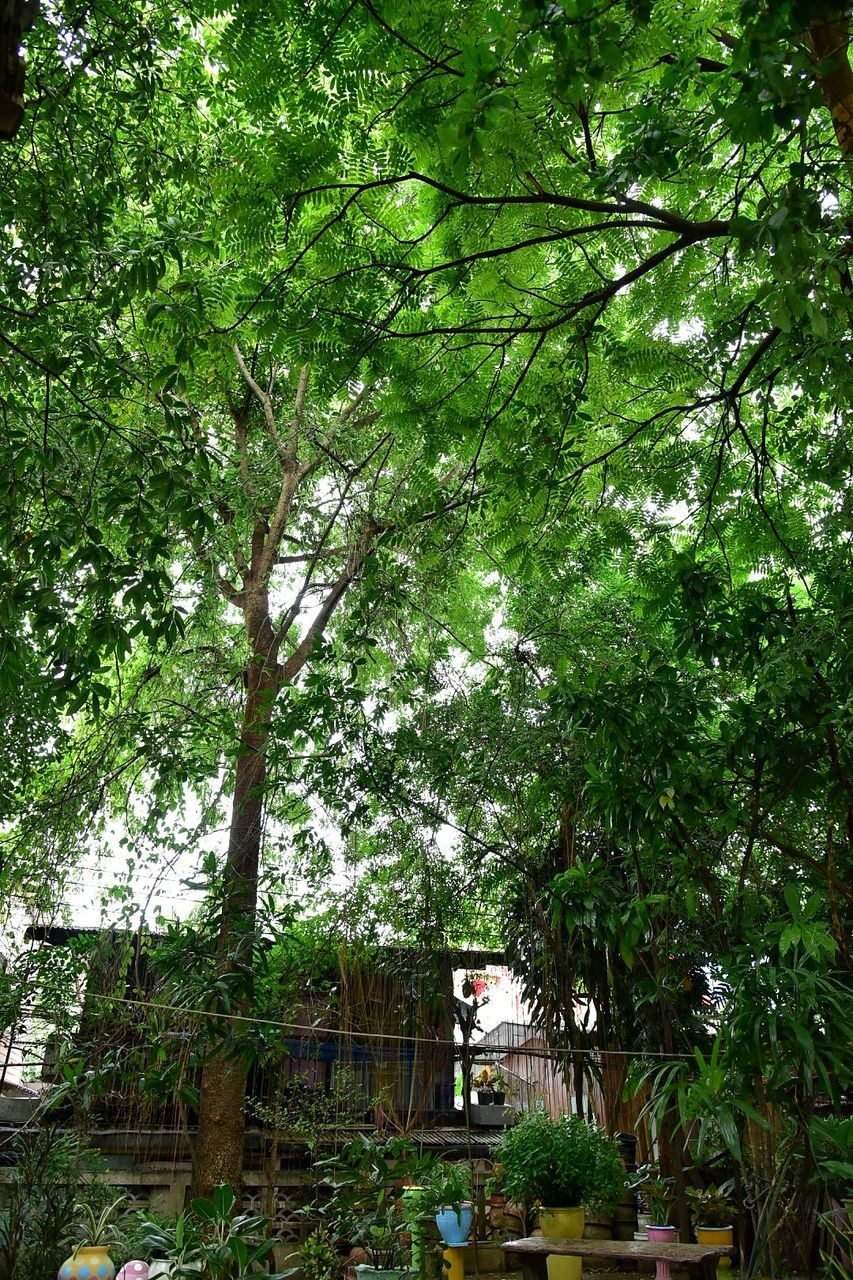 tree, growth, outdoors, day, nature, building exterior, no people, green color, built structure, architecture, branch, beauty in nature