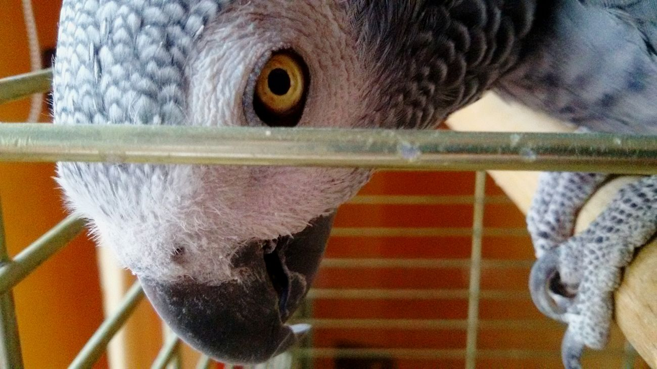 Papagei 🍀 Grey And White Patterns Of Life Pattern Photography Bird Photography Hello World EyeEm Animal Lover Hi Grey Bird Parrot