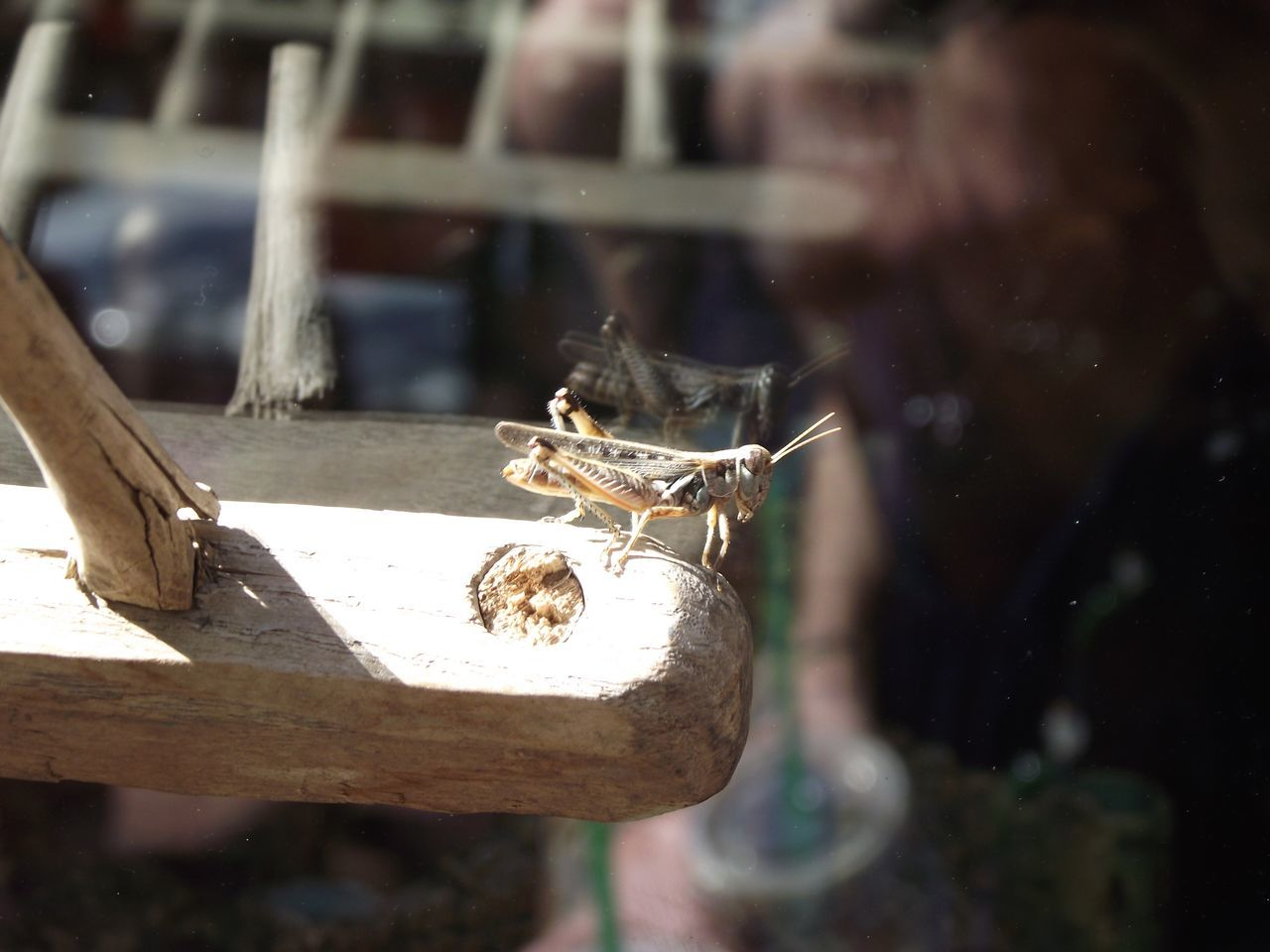 Reflection Window Reflections Crickets Insect Animal Themes Outdoors Day One Animal One Person Summer