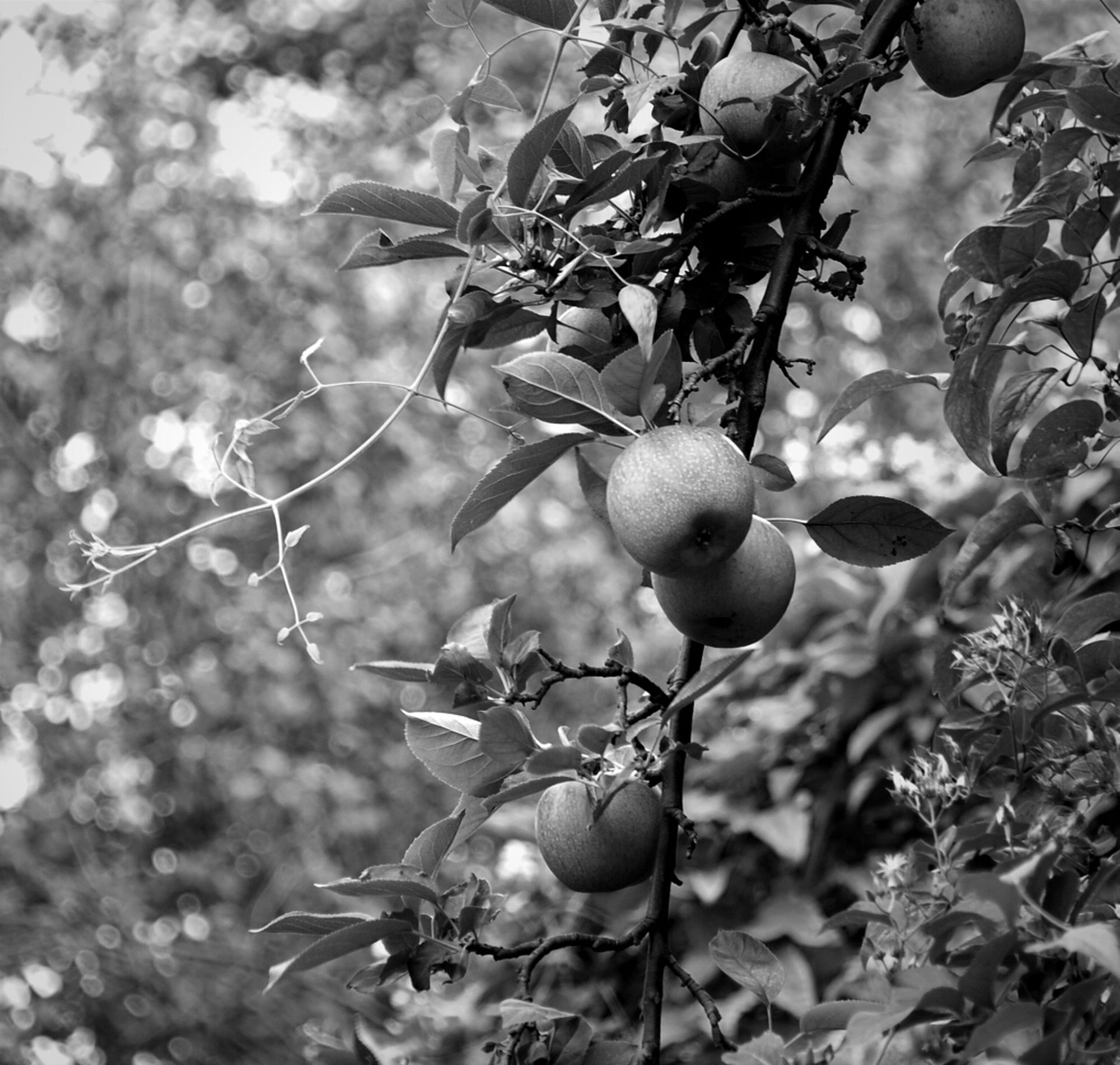 Relaxing Nature Blackandwhite Apple All About Eve