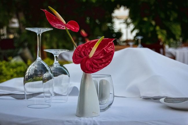 The Week On Eyem Showcase: April Flowers Jamaica Caribbean Sandalsroyalcaribbean Sandalsresorts Flower Dinner Dinner Table Fancy Dinner Table Setting