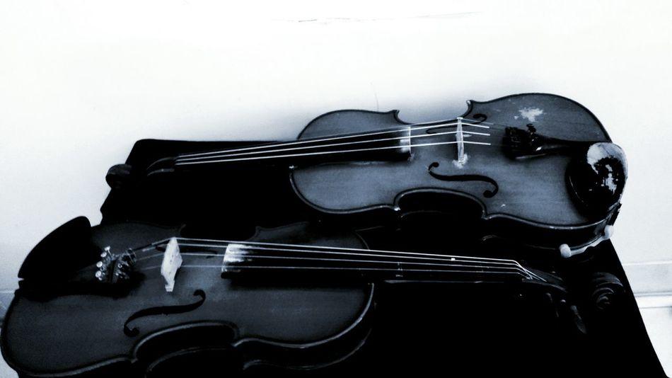 Violin Violinist Viola Music Black & White Violon