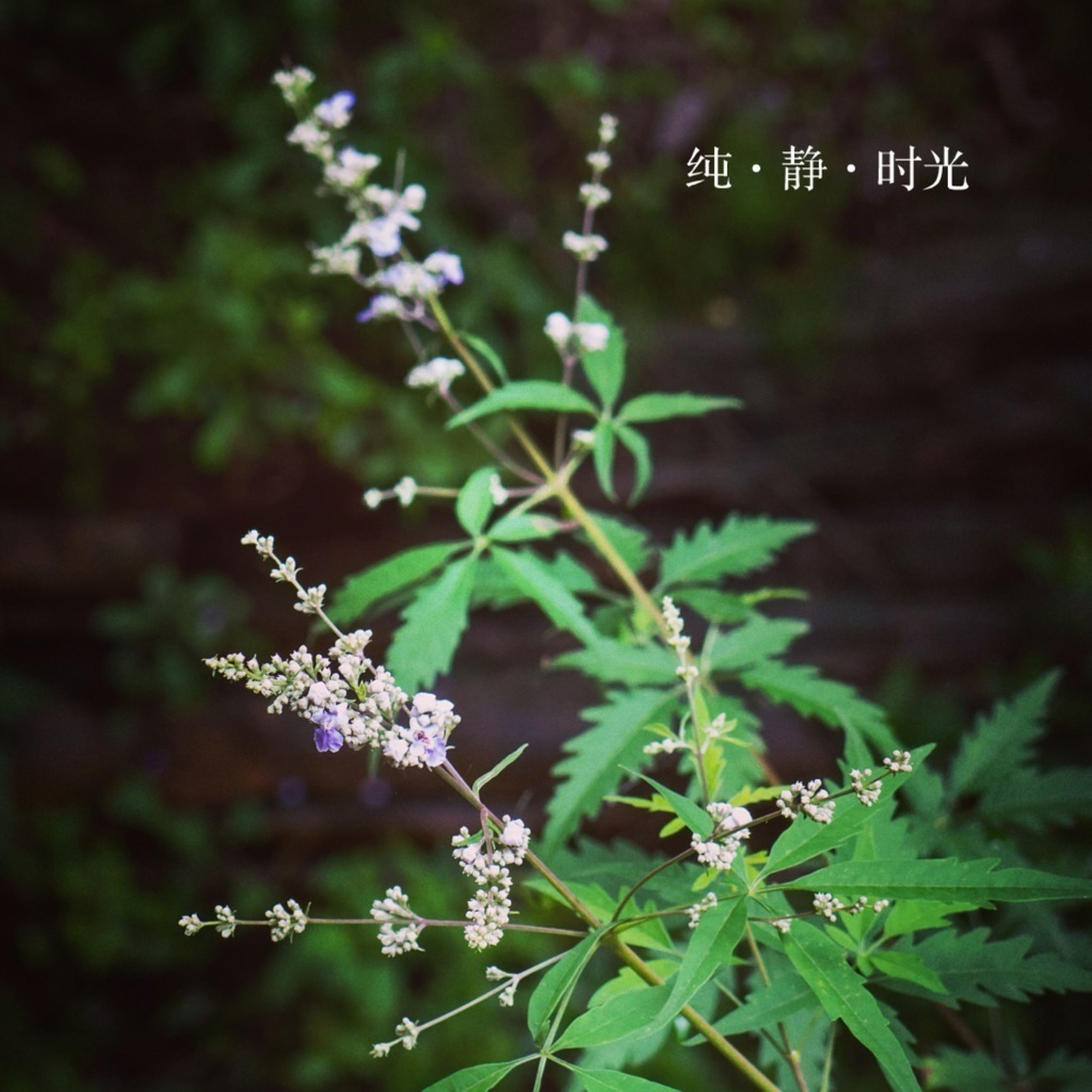 growth, plant, flower, focus on foreground, nature, green color, leaf, close-up, beauty in nature, freshness, outdoors, selective focus, day, no people, fragility, text, white color, growing, stem, green