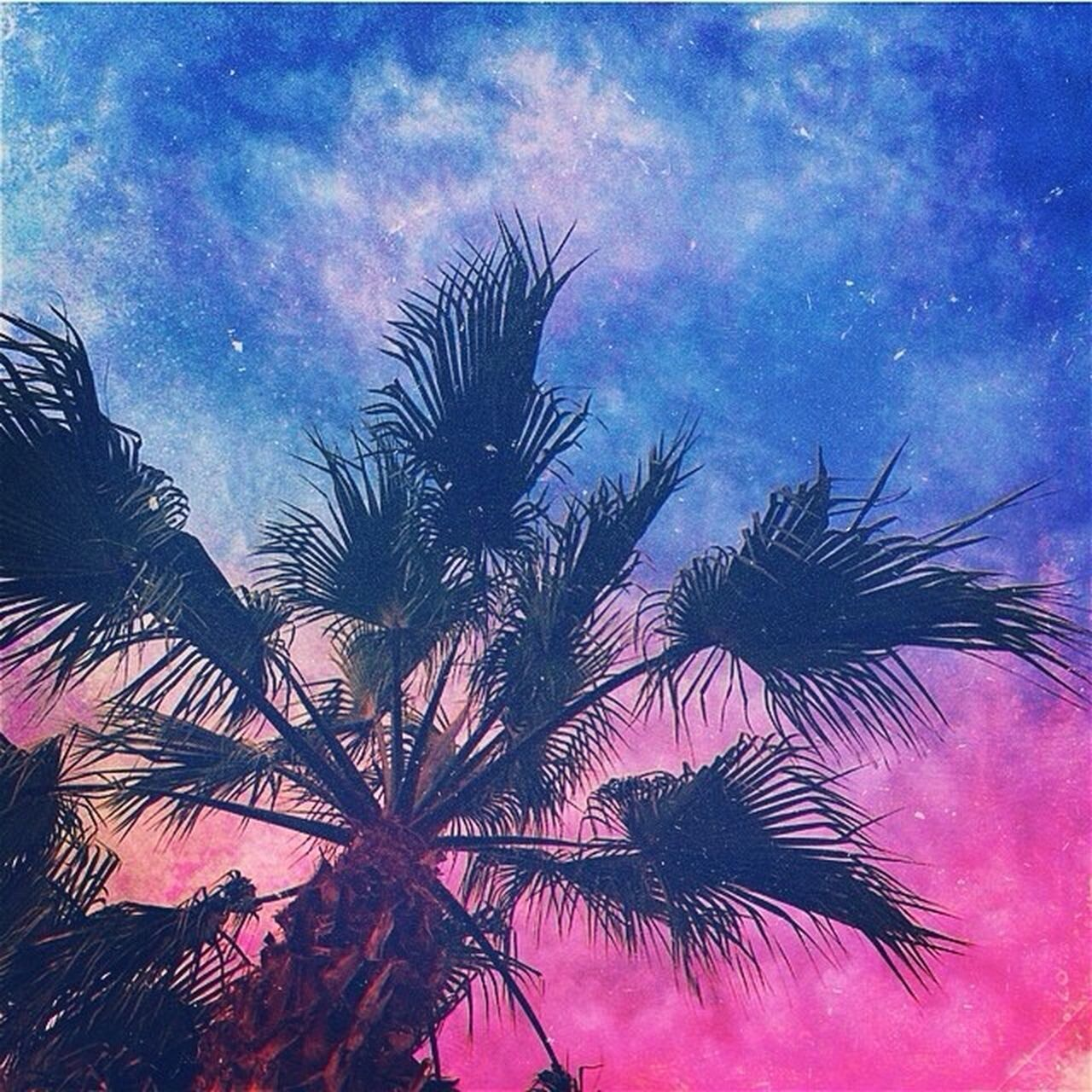 palm tree, no people, night, sky, tree, low angle view, nature, outdoors, beauty in nature, space, close-up