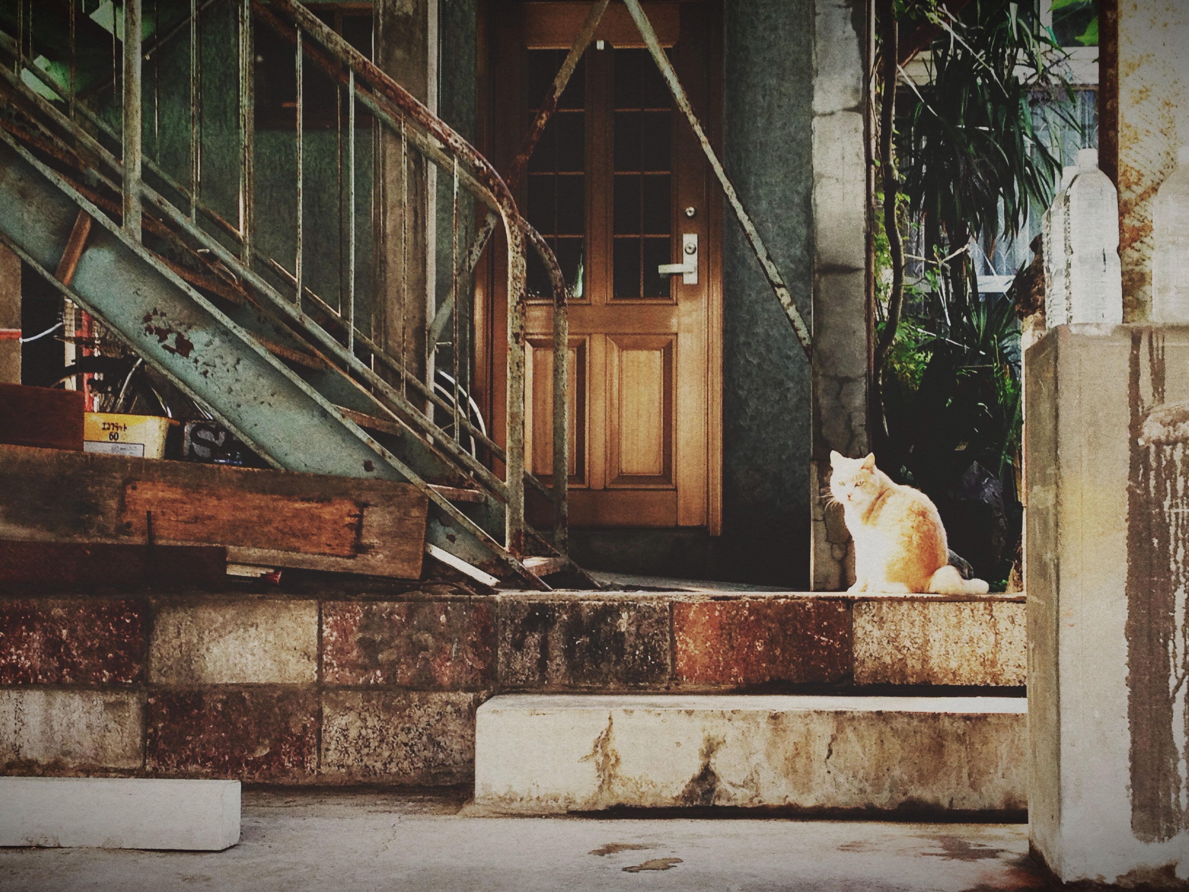 domestic animals, animal themes, mammal, pets, one animal, building exterior, built structure, domestic cat, architecture, cat, house, dog, outdoors, metal, railing, day, no people, feline, wall - building feature, steps