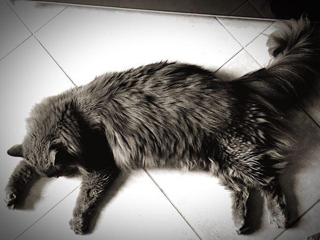 Cat♡ Cats Cat Chats Chat Zufolo Gatto😸 Gatto Gatti Cat Lovers