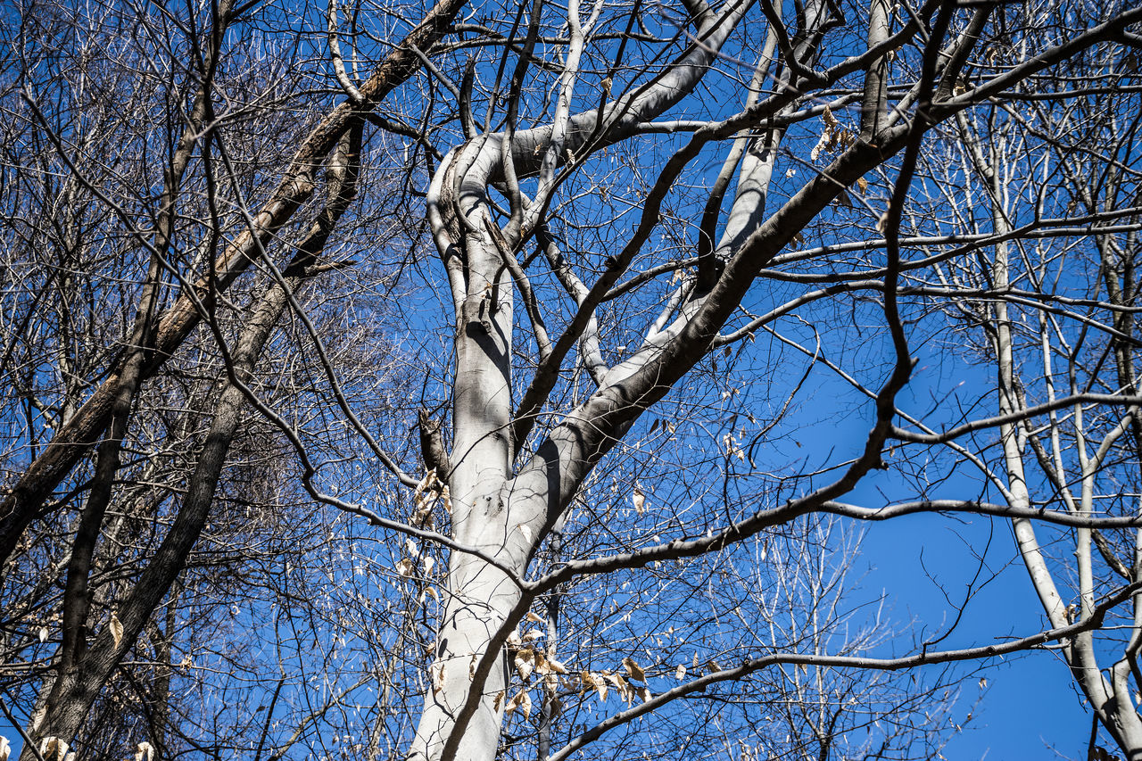 Rock Creek Park, Washington DC Bare Tree Blue Blue Color Branch Clear Sky Day Dried Plant Forest Low Angle View Nature Nature No People Outdoors Sky Tree Winter