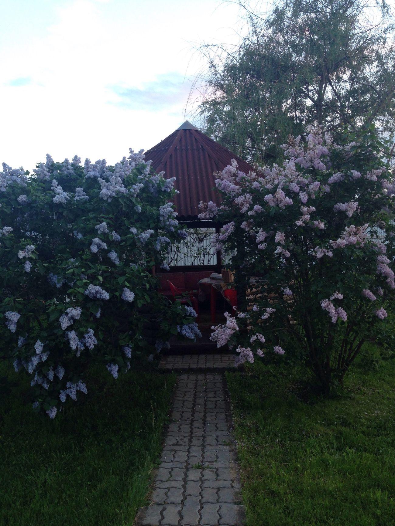 деревня отдых вечер серень