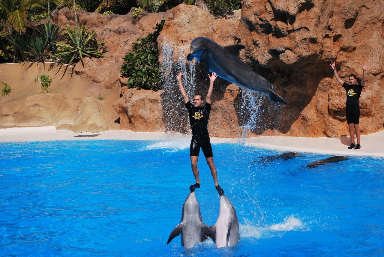 Enjoyment Vacations LoroParque Loro Park Loro Parque Tenerife Teneriffa Tenerife Island Dolphins DolphinShow Dolphinarium Delfin Zoo Zoo Animals  Zoology Zoo Animals  Water Show Kanaren Kanarische Inseln SPAIN Spain♥ Spain ✈️🇪🇸