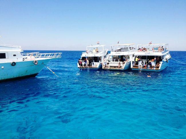 Sea Море Egipt Diving Boat египет Дайвинг
