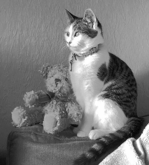 Pets Domestic Animals Domestic Cat Mammal Sitting Dog Animal Themes