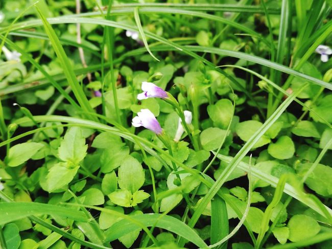 Green Background Small Things Leaf Plant Flower Beauty In Nature Outdoors Grass Close-up Growth Flower Head