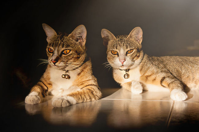 Two cats in afternoon light. Cat Cats Kitten Kitty Animals Animal Light Light And Shadow Pet Open Edit