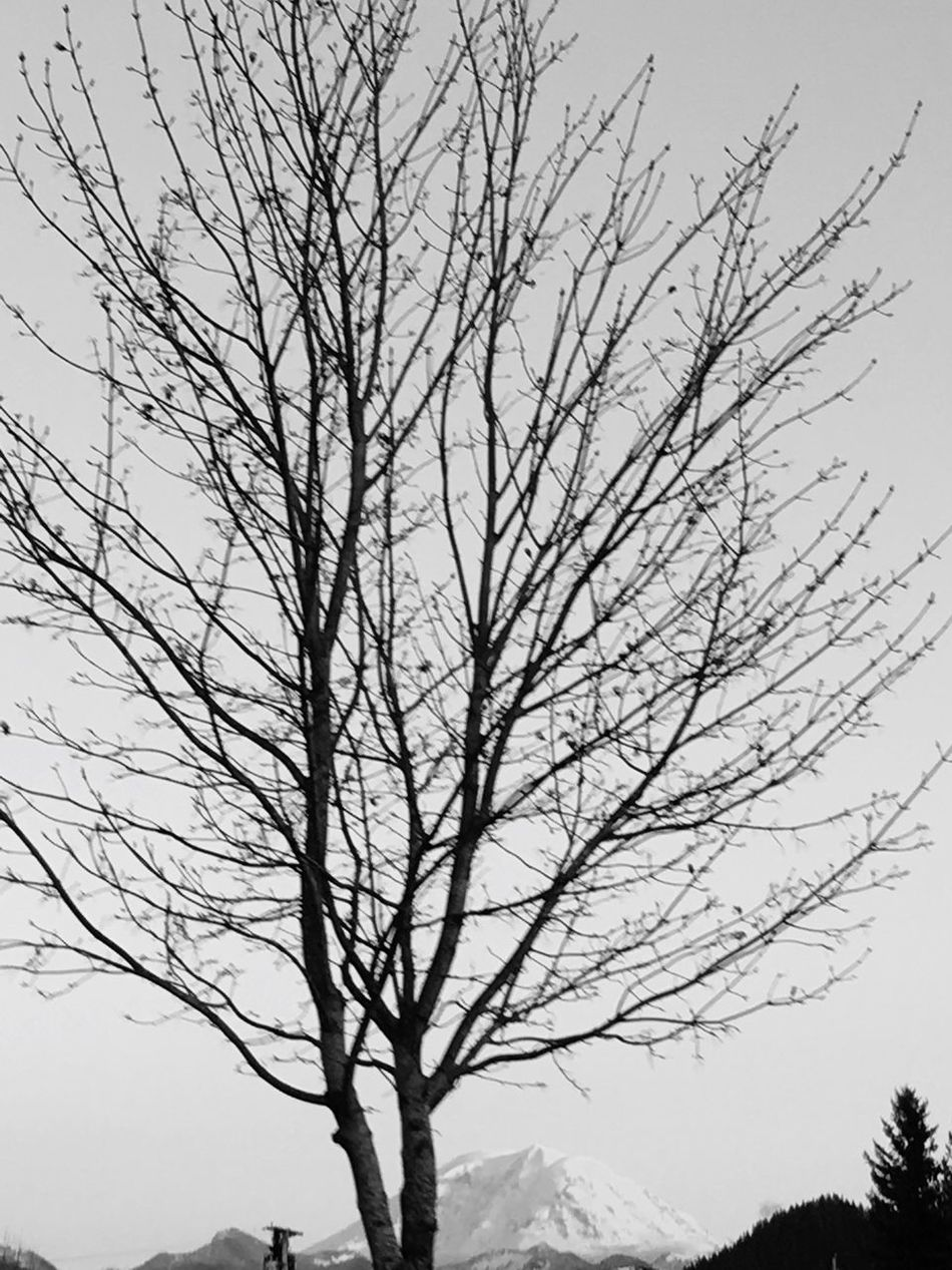 Bare Tree Tree Branch Nature Silhouette Beauty In Nature Tranquility Sky Outdoors No People Scenics Day