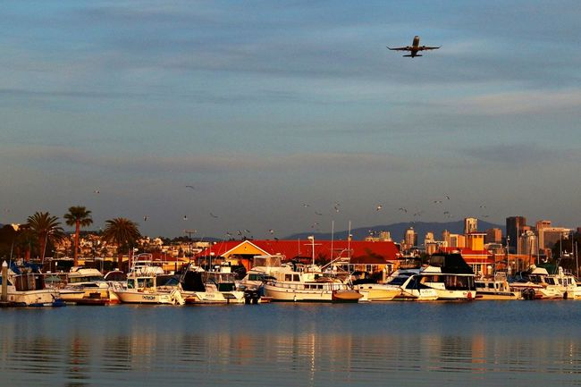 Plane Over Water Plane Overhead Plane Over The Beach Boats Harbour Harbour View Sunset Evening On A Walk California Southern California San Diego Liberty Station Palm Trees Seagulls SEAGULL IN FLIGHT Seagulls And Sea