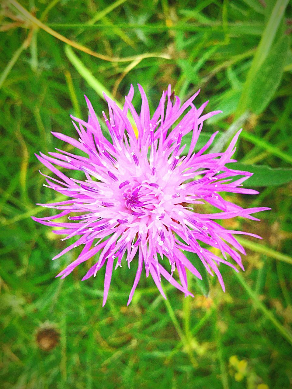 flower, growth, nature, beauty in nature, fragility, petal, purple, flower head, field, plant, freshness, no people, close-up, day, outdoors, blooming, grass, thistle