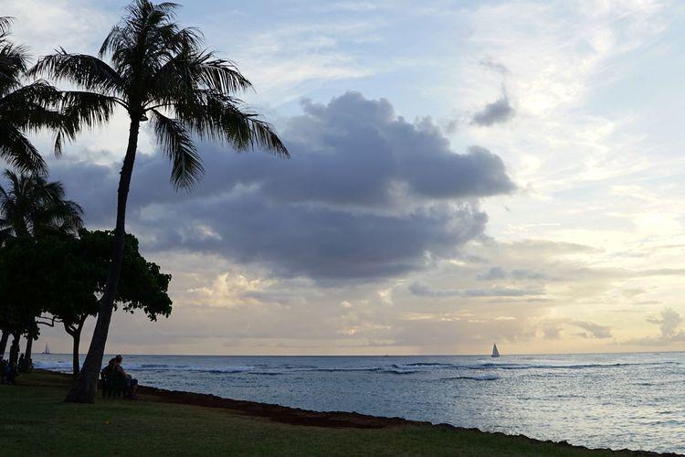 Beach Sea Cloud - Sky Water Horizon Over Water Tree Nature Sky Landscape Tranquility Sand Vacations Sunset Silhouette Summer Travel Destinations Tourism Tranquil Scene Scenics Sun Honolulu, Hawaii Outdoors Oahu / Hawaii Reflection Beachphotography