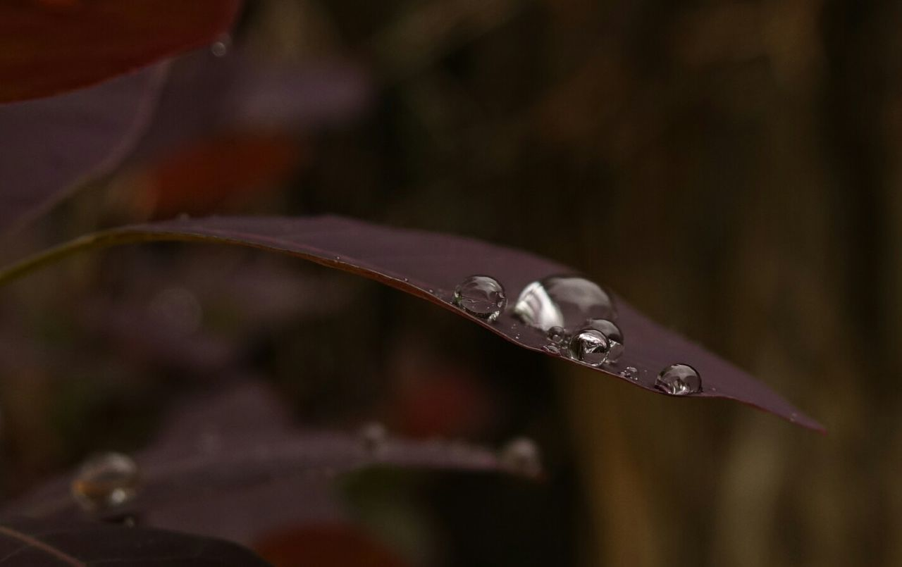 Leaf Water Droplets Beads Of Water Water Drops Macro Beauty Details Of Nature Calming Image Getting Inspired Beautiful Macro Photography Calm And Serene EyeEm Nature Lover Beautiful Nature EyeEm Best Shots Eye4photography  Inspirations Simple Beauty Waterdrops Plants And Flowers Close-up Macro