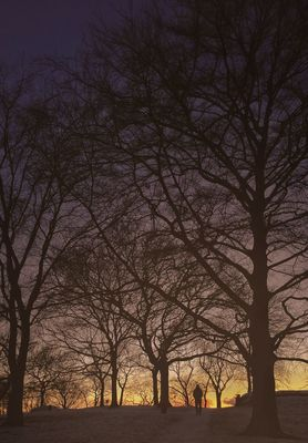 Trees in Göteborg by cimek
