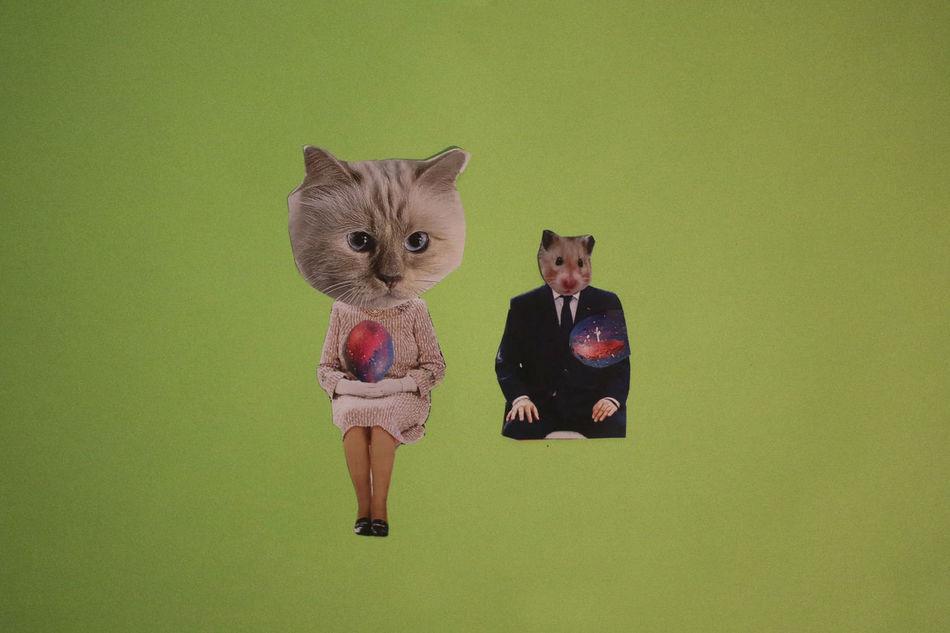 Animal Themes Cat Cats Collage Domestic Animals Domestic Cat Egg Feline Fur Green Handmade Indoors  Magazine Magic Mammal Mashup Paper Paperwork Pet Pets Political Politics President Suit Tie Cut And Paste