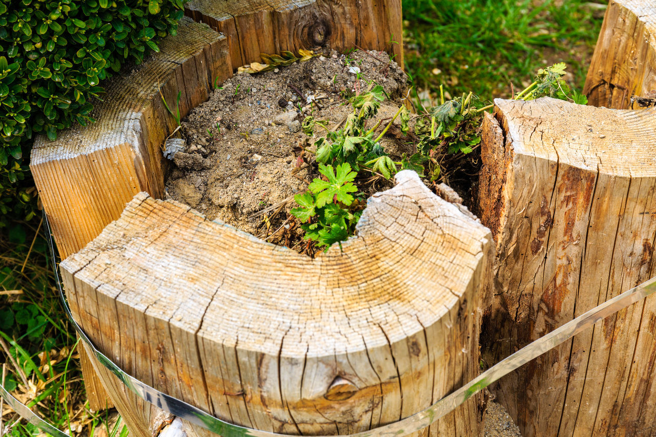 wood - material, log, tree stump, deforestation, timber, lumber industry, tree ring, nature, tree trunk, plant, environmental issues, tree, cross section, no people, outdoors, growth, day, close-up