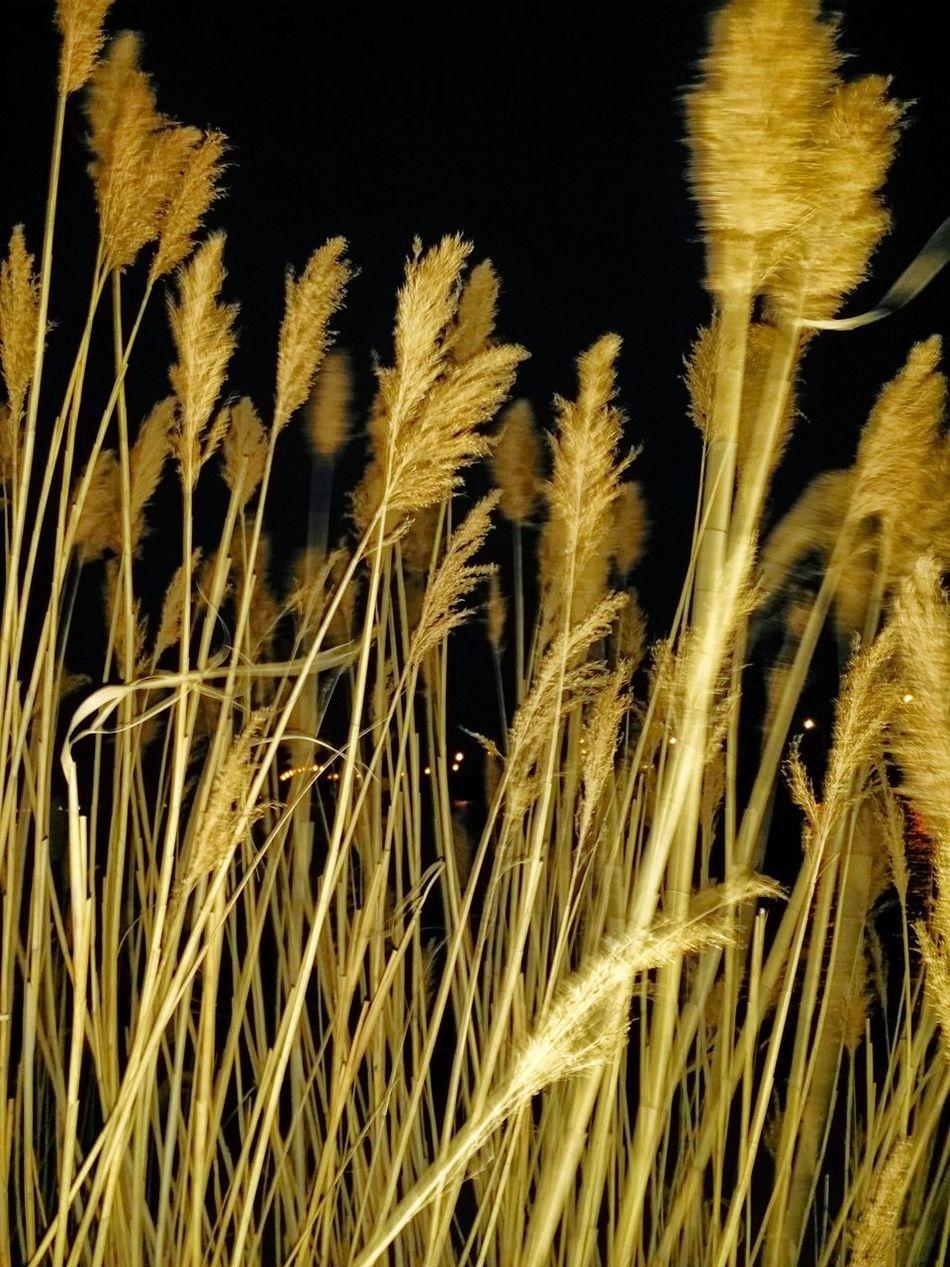Sweet Complexity phonePhotography Beach Photography Lifes A Beach Island Life Art Gallery