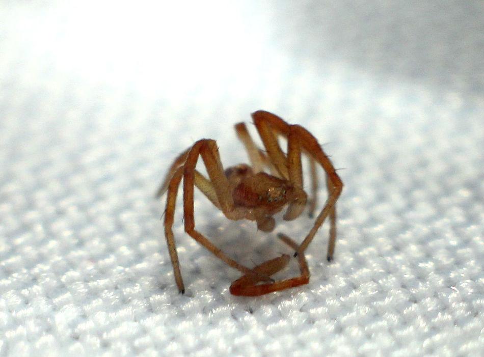 Beautiful stock photos of spinnen, Animal Themes, Animals In The Wild, Arthropod, Brown