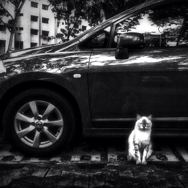 blackandwhite in Singapore by Jason Ho