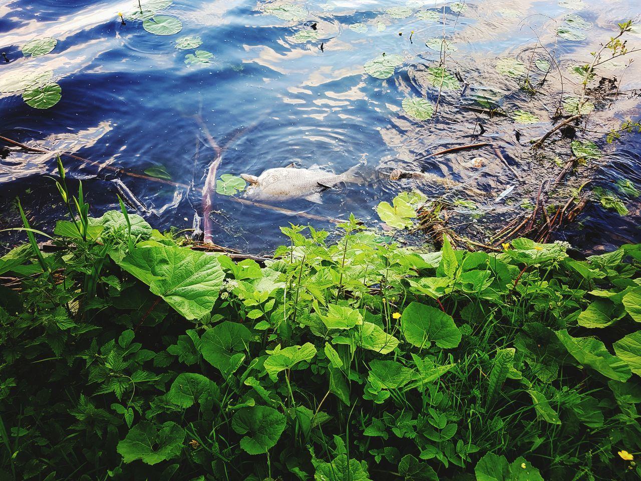 Water Nature Day Outdoors No People Green Color Lake Beauty In Nature Fish EyeEm Gallery Week On Eyeem Eyeemphotography EyeEm Best Shots Taking Photos Showcase:June Popular Photos Beliebte Fotos Eye4photography