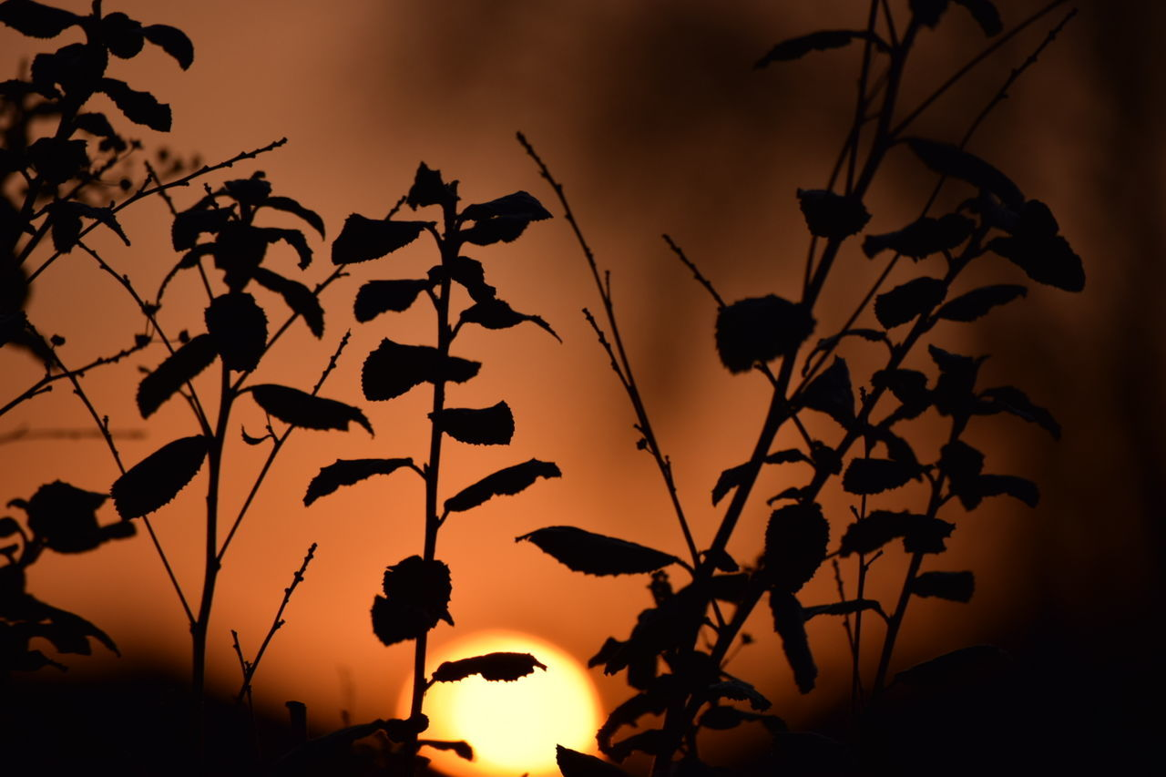 LOW ANGLE VIEW OF PLANT AGAINST SKY AT SUNSET