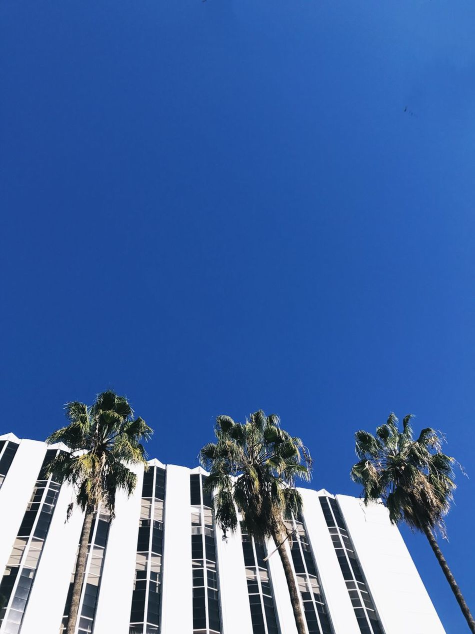 Copy Space Clear Sky Low Angle View Blue Building Exterior Built Structure Architecture Growth Outdoors No People Tree Day Nature Sky Palm Tree Palm Trees