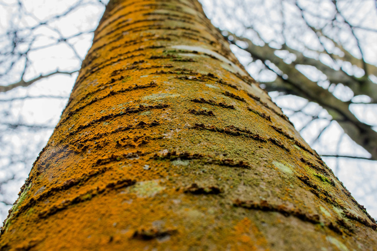 tree trunk, tree, nature, low angle view, day, no people, bare tree, outdoors, textured, lichen, moss, branch, growth, bark, close-up, tranquility, beauty in nature, fungus, sky